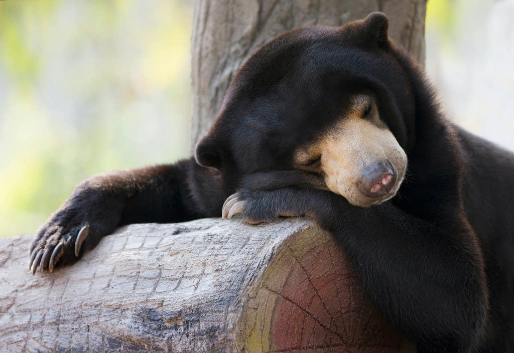 13-Sleeping-Bear-small