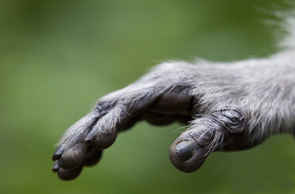 Human like hand(3)