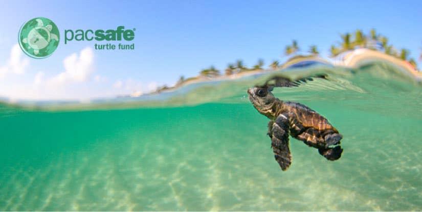 Turtle_Fund_1