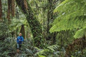 Endurance Runner Saving Tasmania's Rain Forest