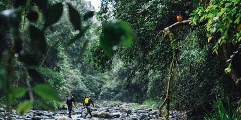 Greenery closing in on two explorers making their way up the Paterson River.