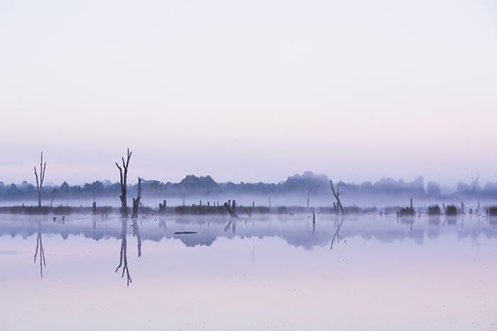 Purple Haze Landscape on a Peaceful Morning
