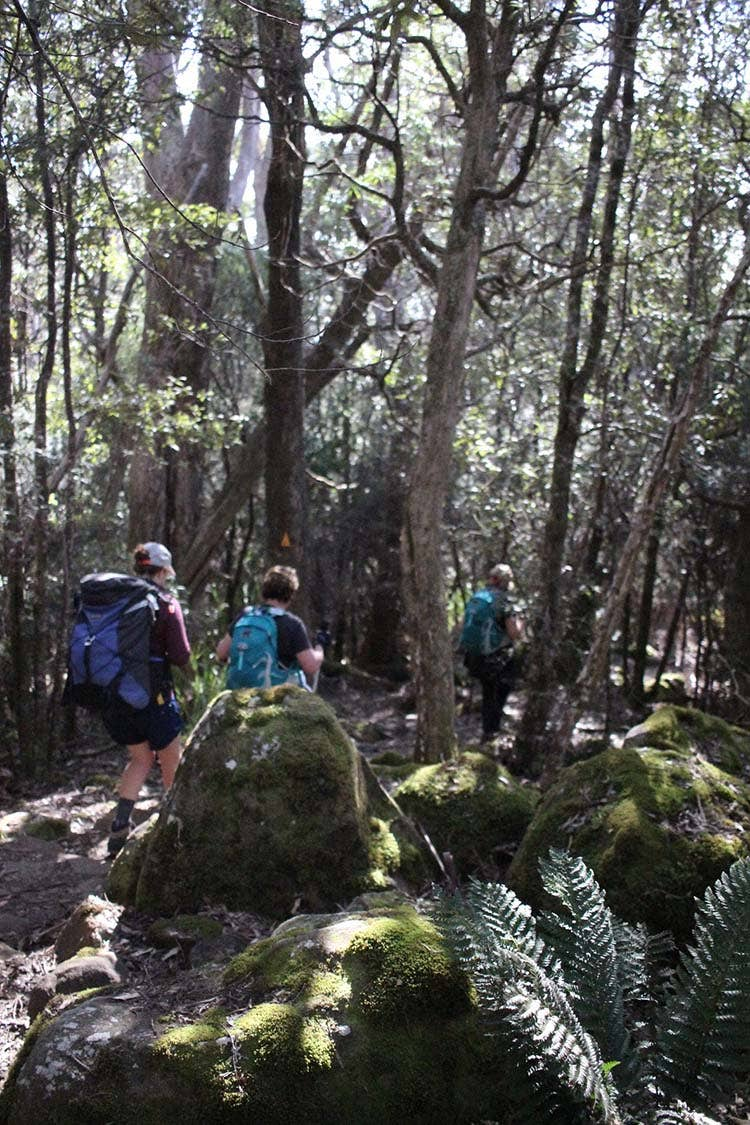 Outdoor trekkers hiking through the forest in Tasmania.