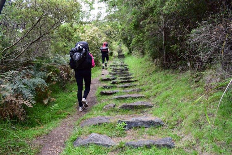 bushwalkers on the 300 steps