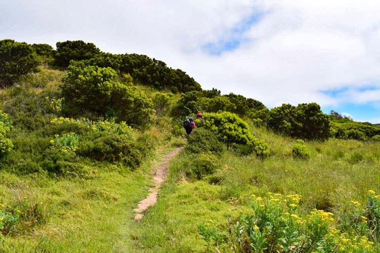 Bushwalking to Cape Otaway Light Station