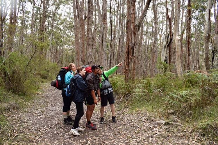Bushwalkers spotting koalas along the walk.