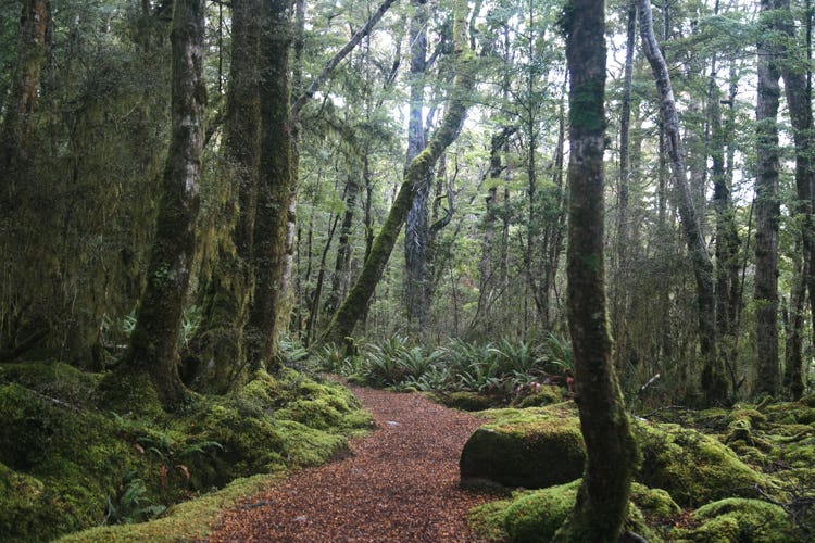 Day 4: The fantastical forests of the Kepler Track
