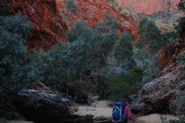 Bushwalkers along the Larapinta