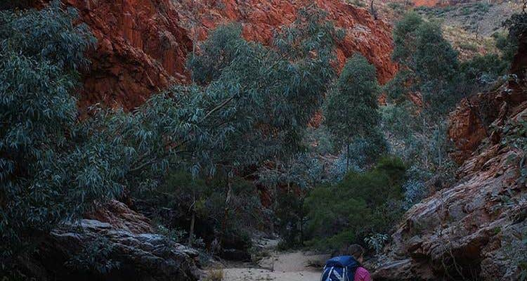 Bushwalkers along the Larapinta