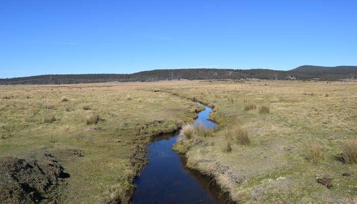 Creek destroyed by feral horses running through the Snowy Mountains
