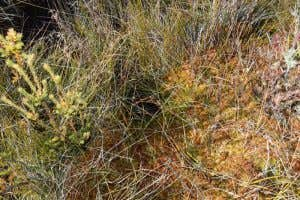 Image of sphagnum moss in long plain, in the Snowy Mountains