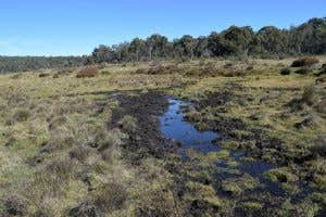 Stream in Long Plain destroyed by feral horses