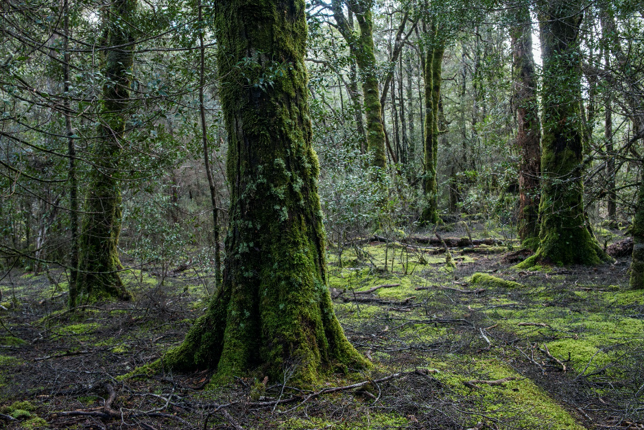 Don't Bag the Environment - Tasmanian Land Conservancy