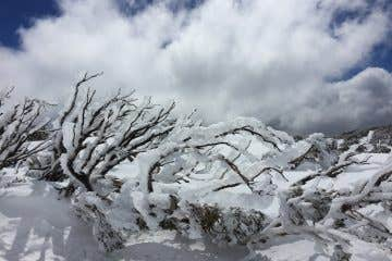 Ice and snow covered branch in the Snowy Mountains Australia