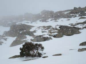 Snowy conditions in Australia's Backcountry Alps